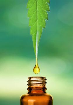 A kendermag olaj felhasználása és előnyei